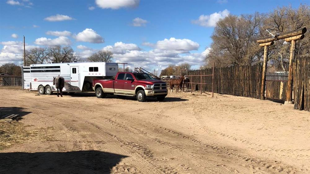 Trailer with truck and horses